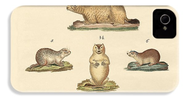 Marmots And Moles IPhone 4 / 4s Case by Splendid Art Prints