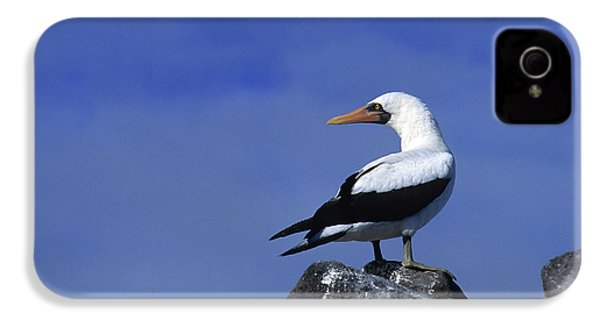Masked Booby Bird IPhone 4 / 4s Case by Thomas Wiewandt