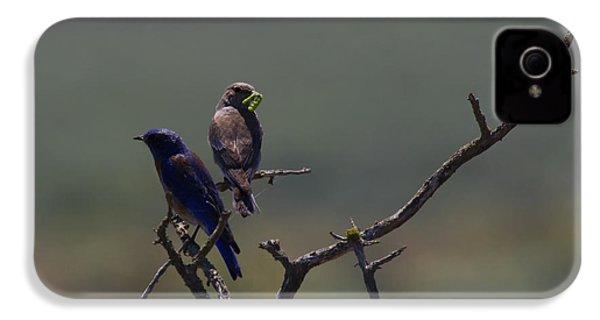 Mountain Bluebird Pair IPhone 4 / 4s Case by Mike  Dawson