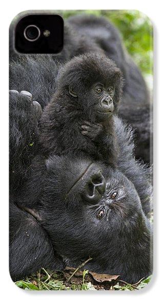 Mountain Gorilla Baby Playing IPhone 4 / 4s Case by Suzi  Eszterhas