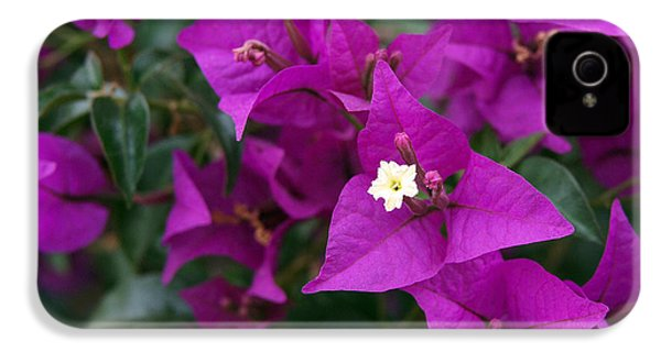 New River Bougainvillea IPhone 4 / 4s Case by Rona Black