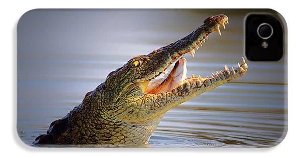 Nile Crocodile Swollowing Fish IPhone 4 / 4s Case by Johan Swanepoel