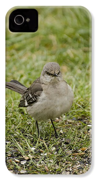 Northern Mockingbird IPhone 4 / 4s Case by Heather Applegate