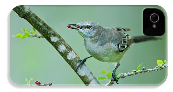 Northern Mockingbird (mimus Polyglottos IPhone 4 / 4s Case by Larry Ditto