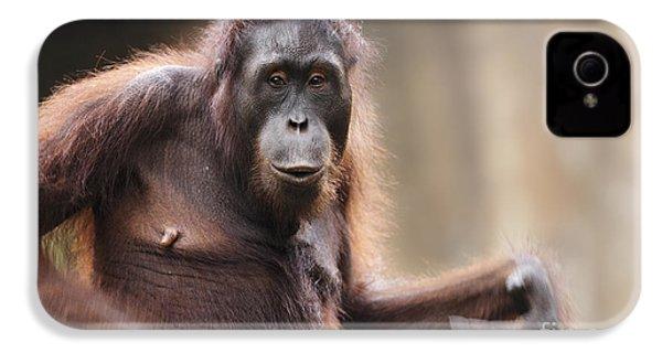 Orangutan IPhone 4 / 4s Case by Richard Garvey-Williams
