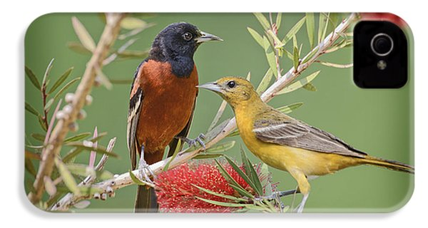 Orchard Oriole Pair IPhone 4 / 4s Case by Bonnie Barry
