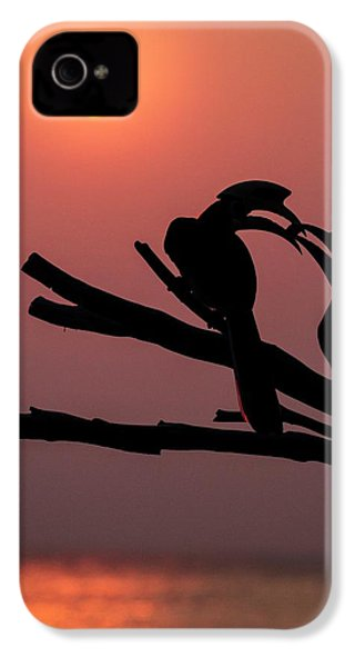 Oriental Pied Hornbills IPhone 4 / 4s Case by Paul Williams