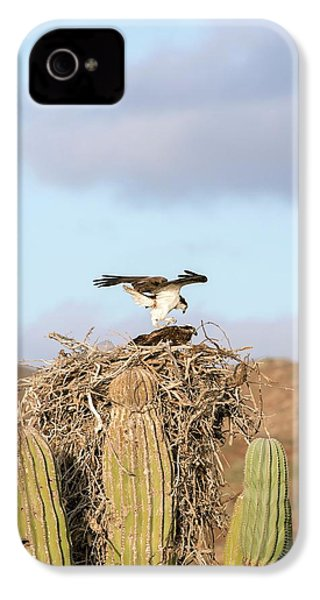 Ospreys Nesting In A Cactus IPhone 4 / 4s Case by Christopher Swann