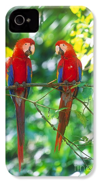 Pair Of Scarlet Macaws IPhone 4 / 4s Case by Art Wolfe