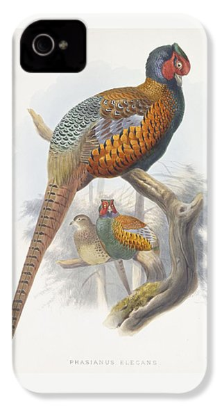 Phasianus Elegans Elegant Pheasant IPhone 4 / 4s Case by Daniel Girard Elliot