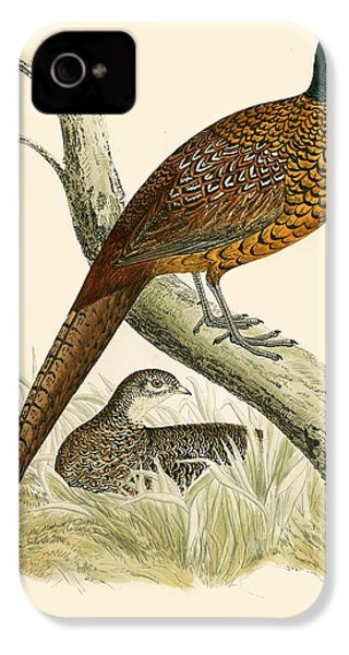 Pheasant IPhone 4 / 4s Case by Beverley R Morris