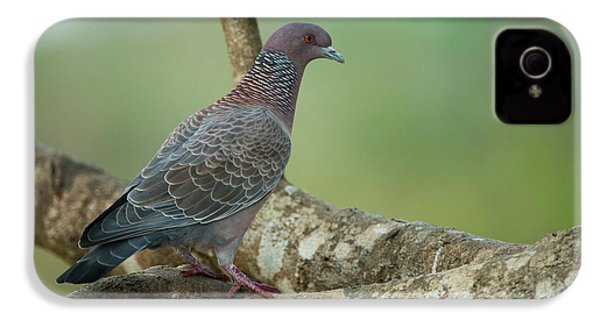 Picazuro Pigeon (patagioenas Picazuro IPhone 4 / 4s Case by Pete Oxford