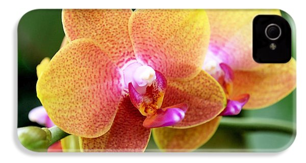 Pink Yellow Orchid IPhone 4 / 4s Case by Rona Black