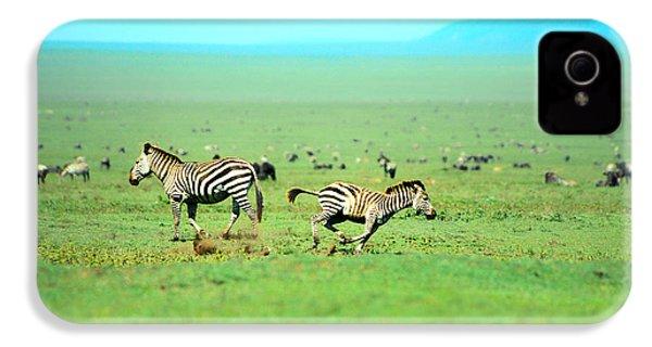 Playfull Zebras IPhone 4 / 4s Case by Sebastian Musial