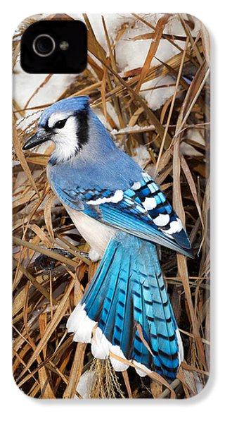 Portrait Of A Blue Jay IPhone 4 / 4s Case by Bill Wakeley