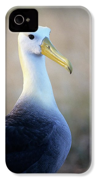 Portrait Of A Waved Albatross IPhone 4 / 4s Case by Thomas Wiewandt