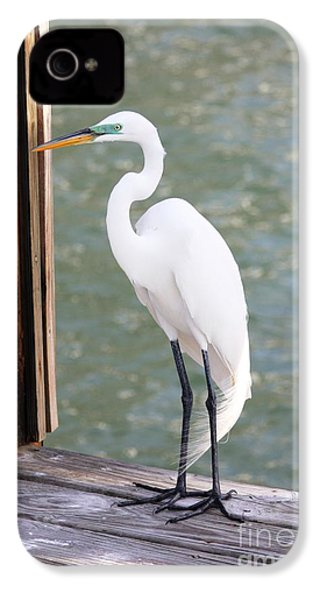 Pretty Great Egret IPhone 4 / 4s Case by Carol Groenen