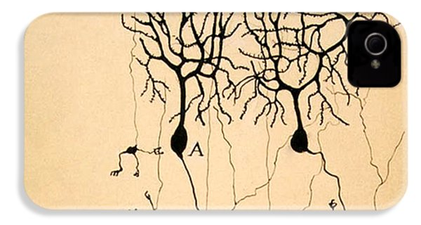 Purkinje Cells By Cajal 1899 IPhone 4 / 4s Case by Science Source