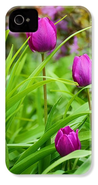 Purple Gems- Purple Tulips Rhode Island Tulips Purple Flower IPhone 4 / 4s Case by Lourry Legarde