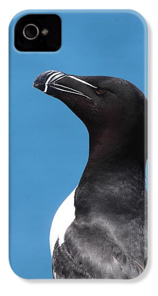 Razorbill Profile IPhone 4 / 4s Case by Bruce J Robinson