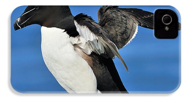 Razorbill IPhone 4 / 4s Case by Tony Beck