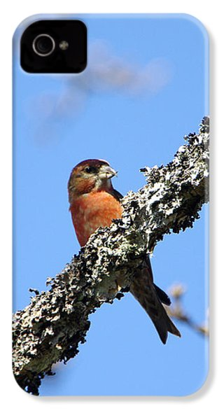 Red Crossbill Finch IPhone 4 / 4s Case by Marilyn Wilson