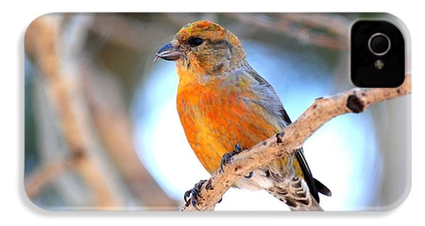 Red Crossbill On Aspen IPhone 4 / 4s Case by Marilyn Burton
