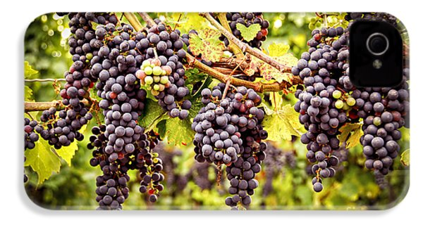 Red Grapes In Vineyard IPhone 4 / 4s Case by Elena Elisseeva