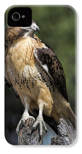 Red Tailed Hawk IPhone 4 / 4s Case by Dale Kincaid