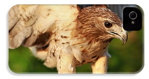 Red Tailed Hawk Hunting IPhone 4 / 4s Case by Dan Sproul