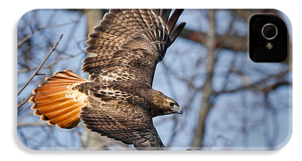 Redtail Hawk IPhone 4 / 4s Case by Bill Wakeley