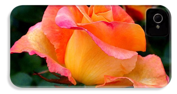 Rose Beauty IPhone 4 / 4s Case by Rona Black