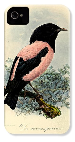 Rosy Starling IPhone 4 / 4s Case by J G Keulemans