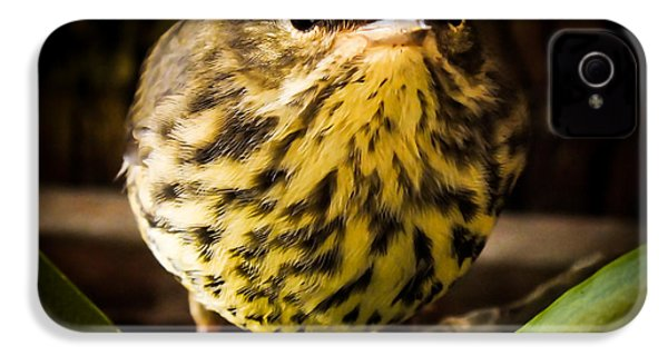 Round Warbler IPhone 4 / 4s Case by Karen Wiles