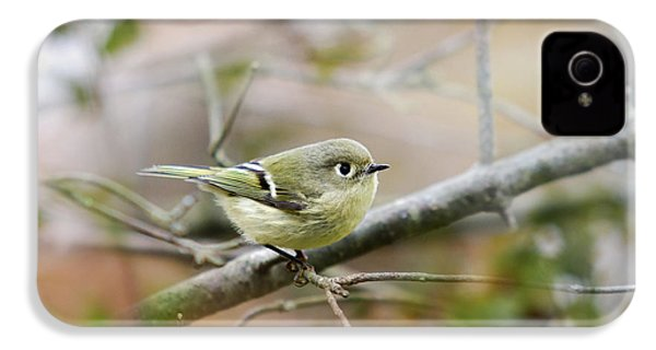 Ruby-crowned Kinglet IPhone 4 / 4s Case by Christina Rollo