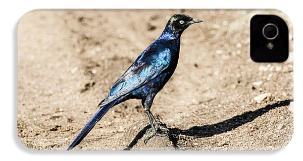 Ruppell's Glossy-starling IPhone 4 / 4s Case by Photostock-israel