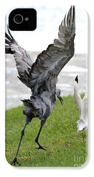 Sandhill Chasing Ibis IPhone 4 / 4s Case by Carol Groenen