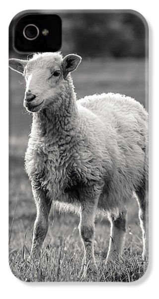 Sheep Art  IPhone 4 / 4s Case by Lucid Mood