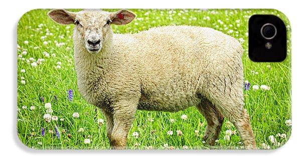 Sheep In Summer Meadow IPhone 4 / 4s Case by Elena Elisseeva