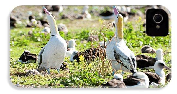 Short-tailed Albatross (phoebastria IPhone 4 / 4s Case by Daisy Gilardini