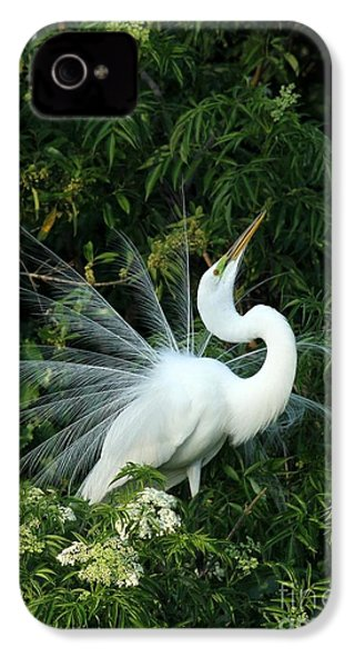 Showy Great White Egret IPhone 4 / 4s Case by Sabrina L Ryan