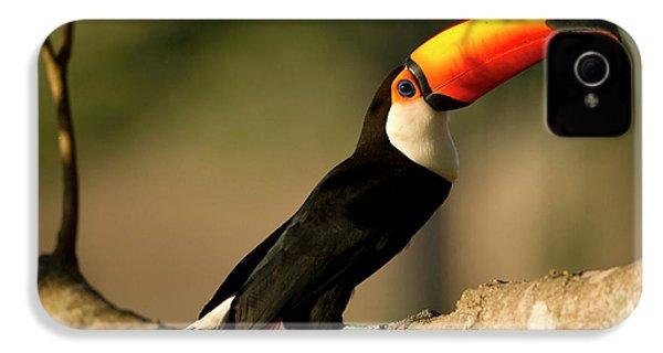 South America, Brazil, Pantanal, Mato IPhone 4 / 4s Case by Joe and Mary Ann Mcdonald