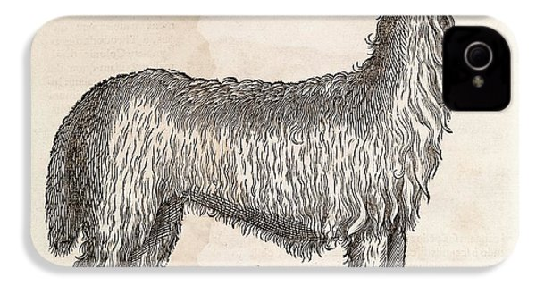 South American Camelid IPhone 4 / 4s Case by Middle Temple Library