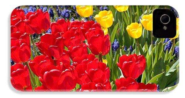 Spring Sunshine IPhone 4 / 4s Case by Carol Groenen