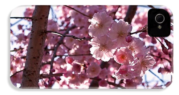 Sunlit Cherry Blossoms IPhone 4 / 4s Case by Rona Black