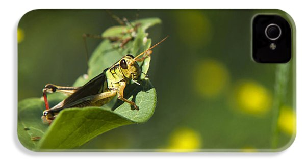 Sunny Green Grasshopper IPhone 4 / 4s Case by Christina Rollo