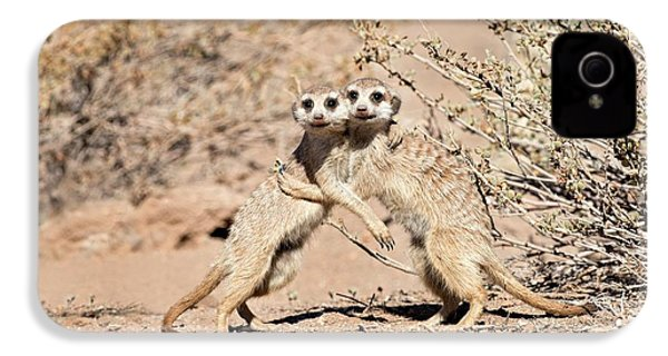 Suricates At Play IPhone 4 / 4s Case by Tony Camacho