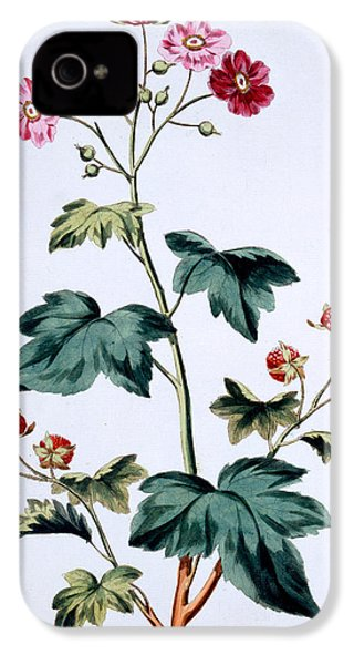 Sweet Canada Raspberry IPhone 4 / 4s Case by John Edwards