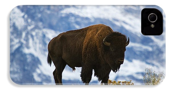 Teton Bison IPhone 4 / 4s Case by Mark Kiver