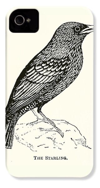 The Starling IPhone 4 / 4s Case by English School
